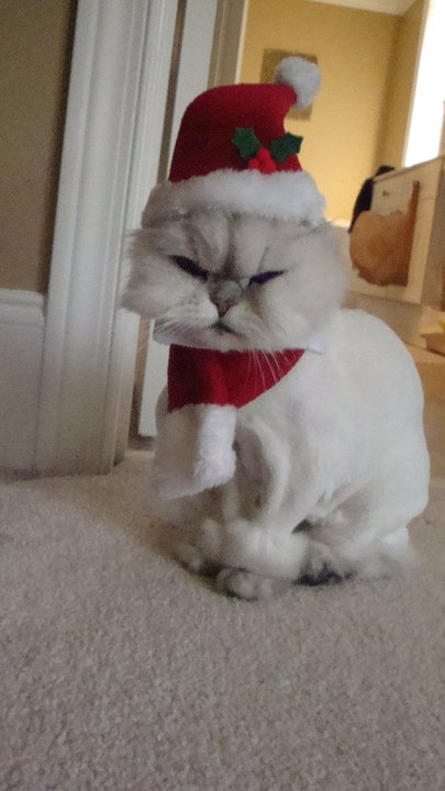 Santa Baby- Tabitha the Kitty